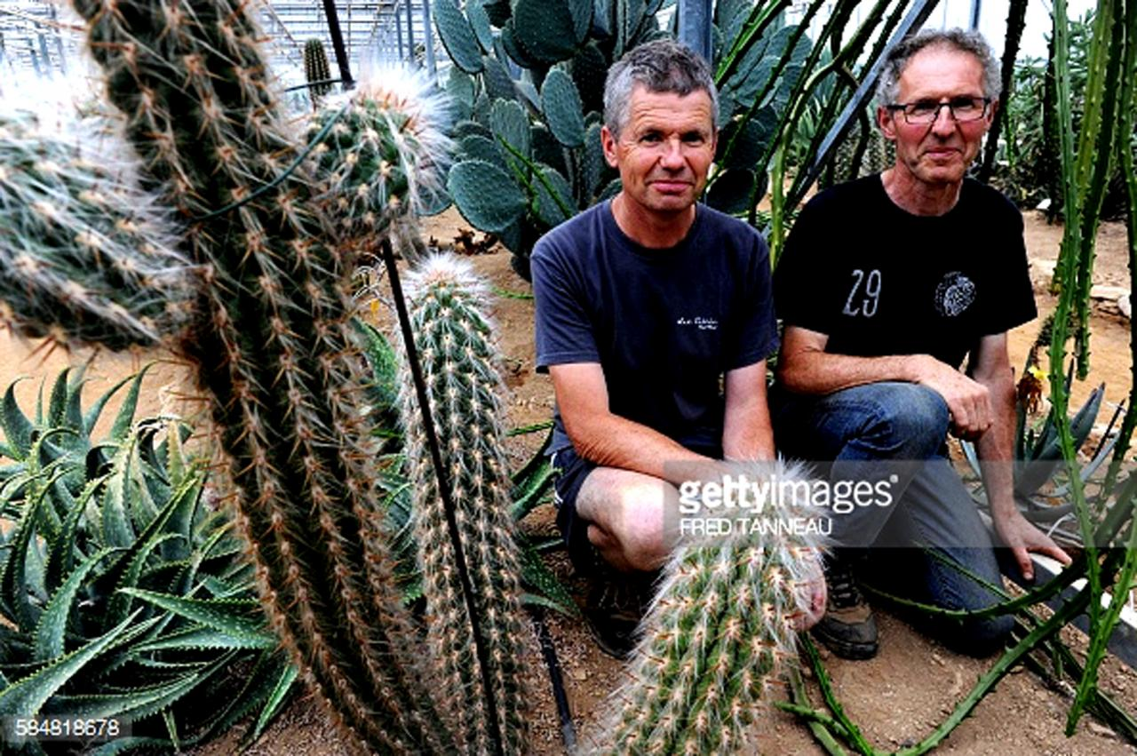 cactuseraie